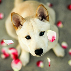 ico-hm-dog-with-flowers